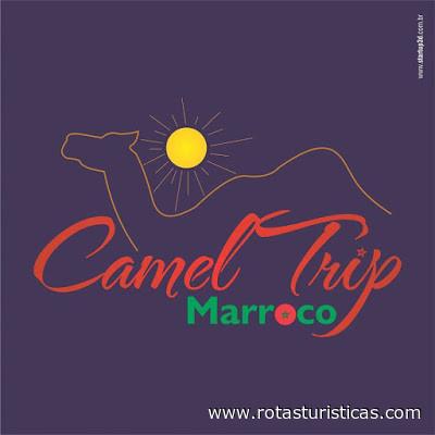 Camel Trip Morocco