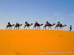 Merzougaonline Camel trek bivouac