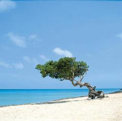 Playas de Palm Beach (Aruba)