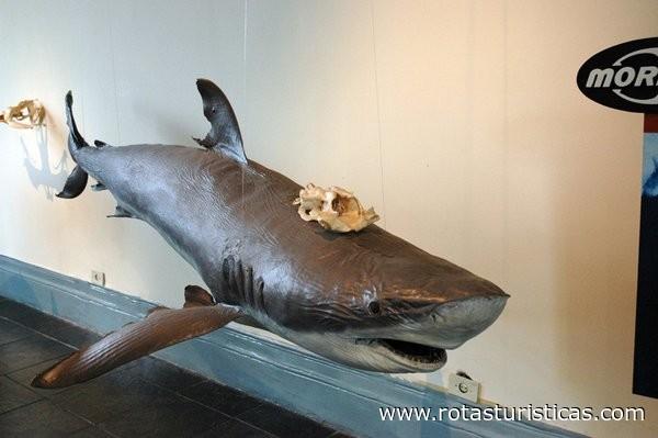 Museu da Pesca