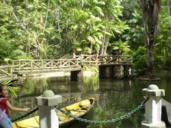 Amazon Forest Rodrigues Alves Botanical Garden (Belém)
