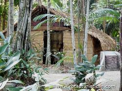 Bosque da Ciência (Manaus)