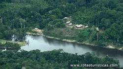 Parque Nacional do Jaú (Manaus)