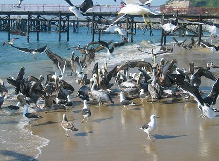 Praia dos Portales (Valparaíso)