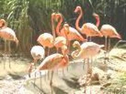 Jardín  Zoológico  de Barranquilla