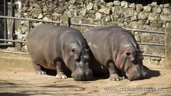 Jardim Zoológico de Maputo