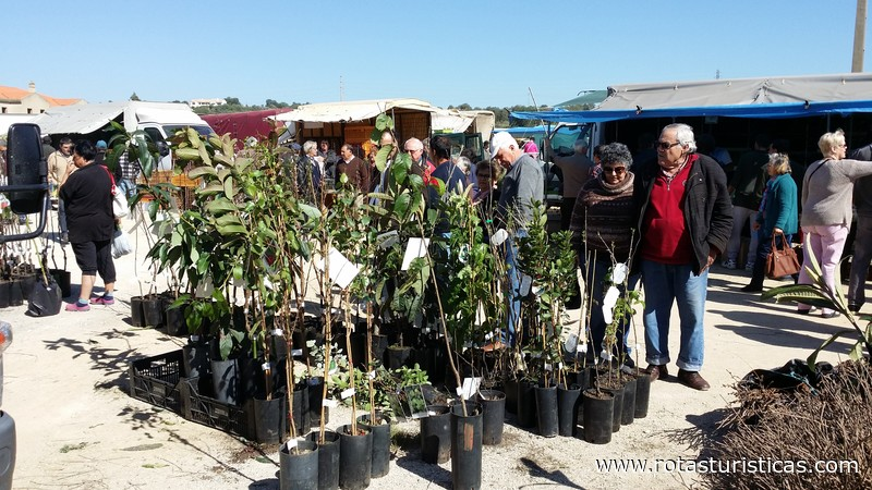Monthly Market of Algoz (Algarve)