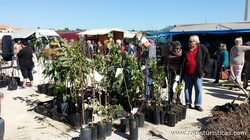 Monthly Market of Algoz (Algarve)