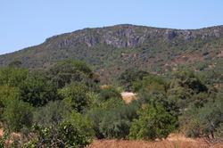 Rocha da Pena (Algarve)