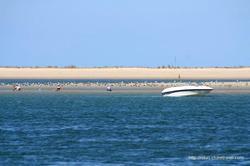 Praia da Ilha da Armona (Algarve)