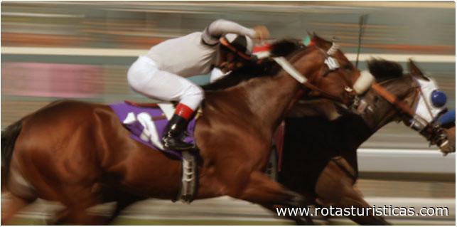 Horse Racing Track (Bratislava)