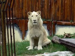 Zoológico de Bratislava