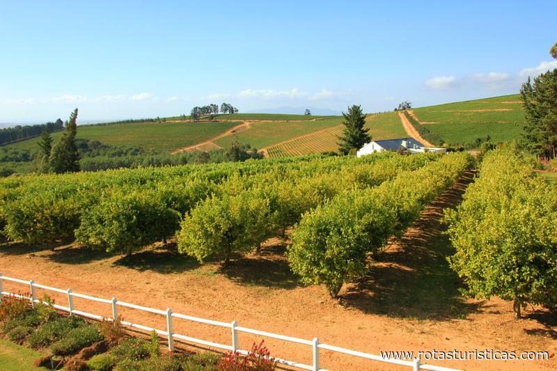 Propriedade do Vinho Mitre Edge - Vinhos de Stellenbosch